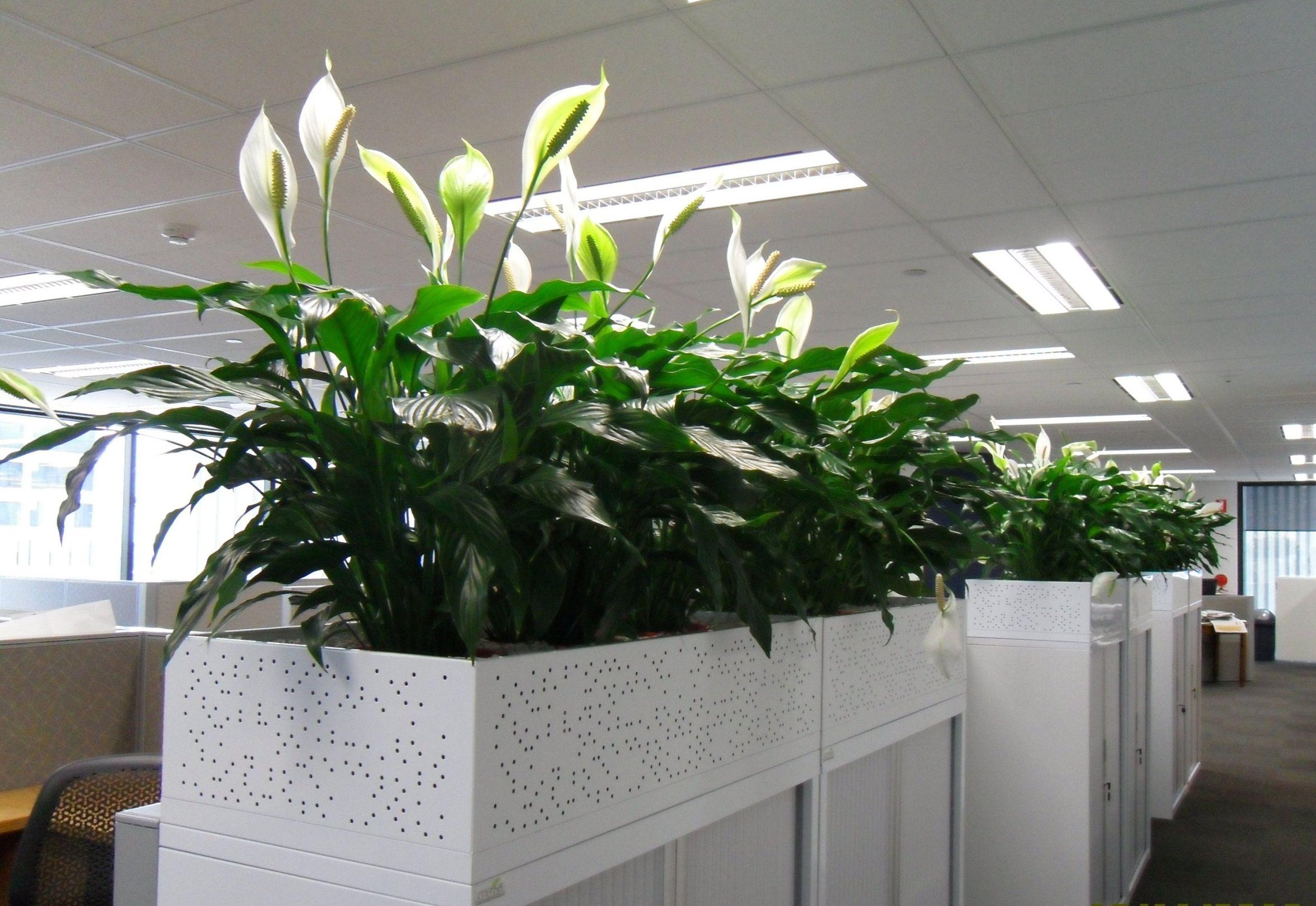 Уход за растениями в офисе